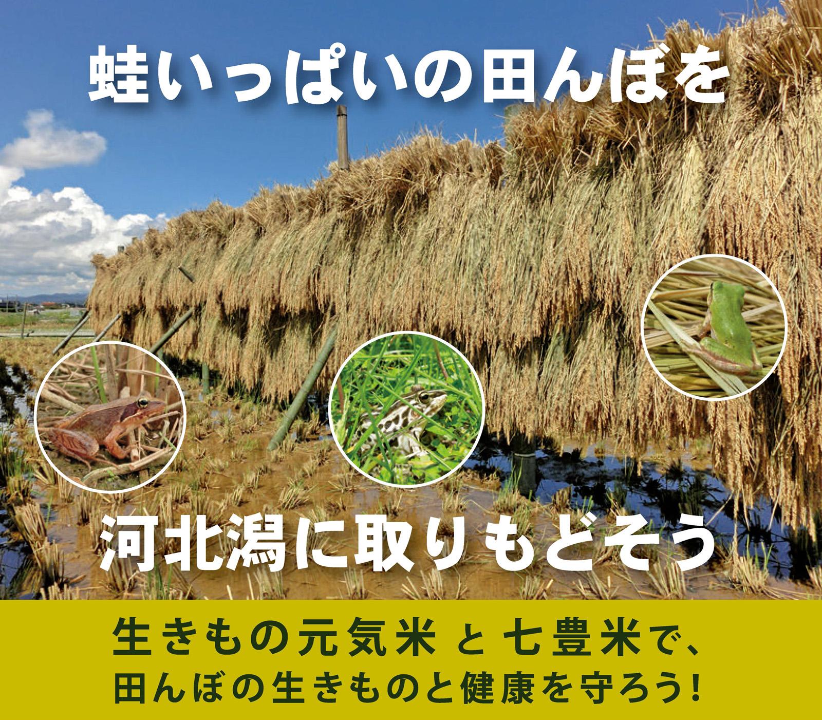 ninteirenkeijigyo5_kahokugatakosyo