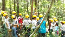 NPOと協働で行った小学生対象の間伐体験